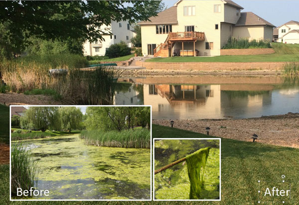 Pond Weed Control Before and After
