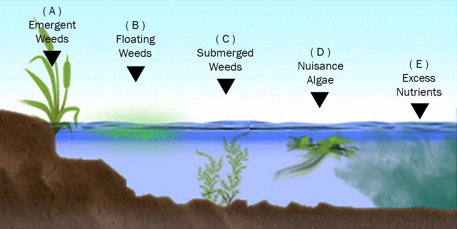 Aquatic Vegetation Graph